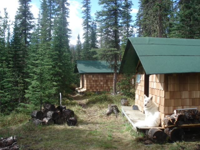 Cabins in Spring